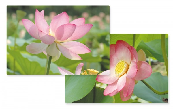 Romantic Lotus Tischset doppelseitig 45x30cm