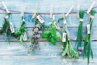 Hanging Herbs Tischset 45x30 cm